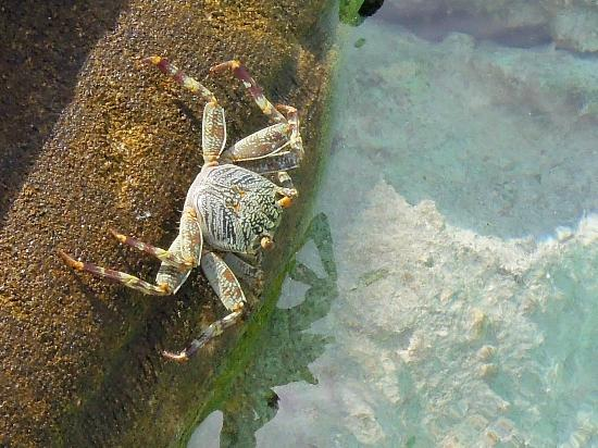 Olhuveli Beach & Spa Maldives: краб
