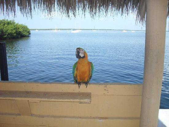 Hampton Inn Key Largo : Mango
