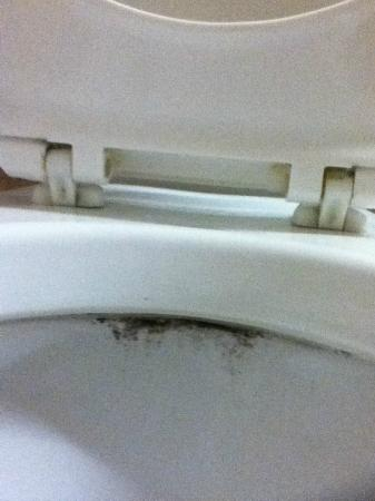 Quality Inn Deep Creek Lake: Toilet not clean.