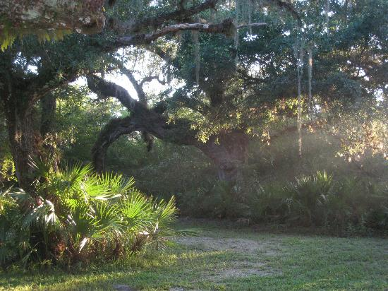 Rasayana Cove Ayurvedic Retreat: Ayurveda in pristine Florida nature