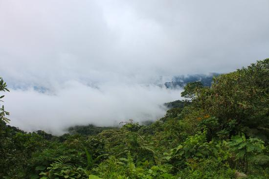 Johnny Loves Nature: the cloud forest