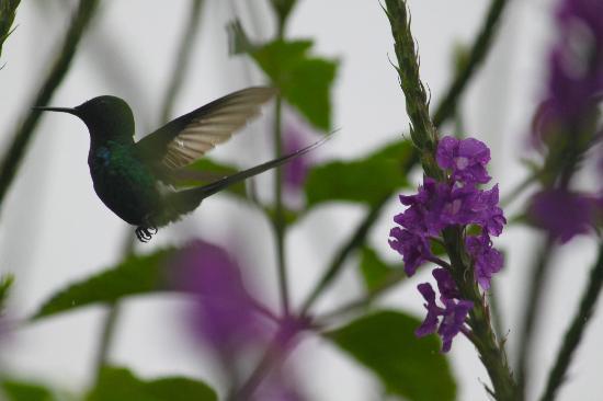 Johnny Loves Nature: hummingbird