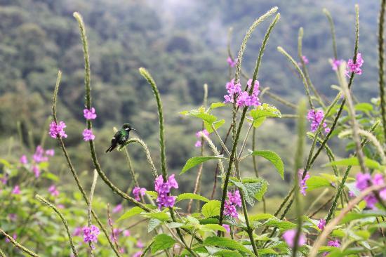Johnny Loves Nature: Hummingbirds in the back garde