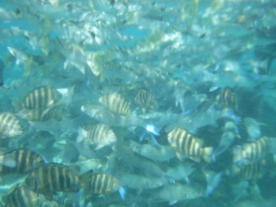 Lagoonarium: under the sea