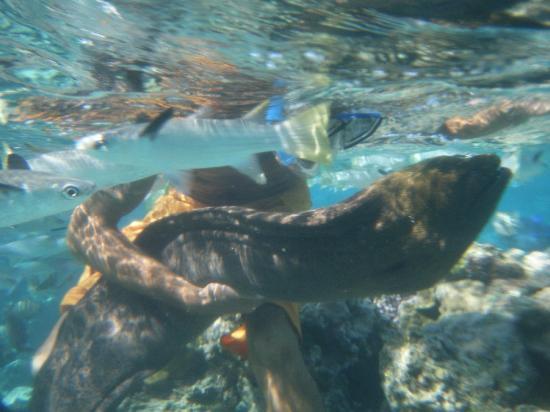 Lagoonarium: an eel