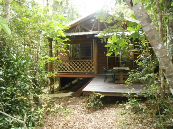 Crater Lakes Rainforest Cottages: Rainforest