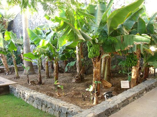 Vincci Selección La Plantación del Sur: Jardines y agua de piscina muy cuidados