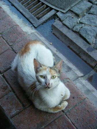 Amasra, Turkey: Fatma Gül- the restaurant manager's cat
