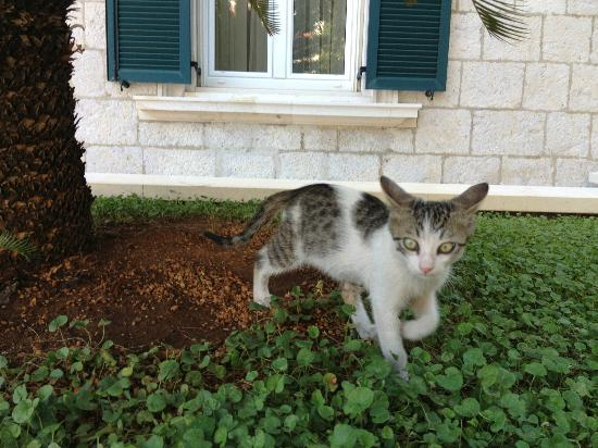Hilton Imperial Dubrovnik: The 'hotel' tabby!