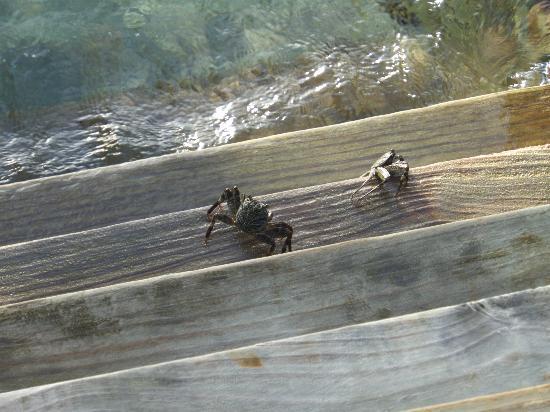 Meeru Island Resort & Spa : water villa steps. crabs