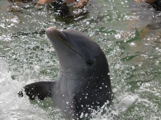 Delfinario en Cayo Santa Maria : Our dolphin