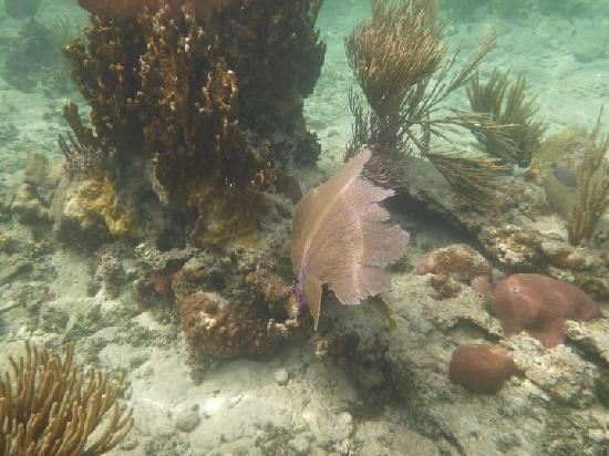 Delfinario en Cayo Santa Maria : Under the sea....