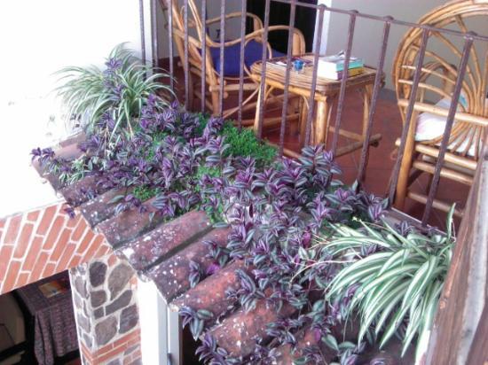 Taanah Guest House Antigua: .