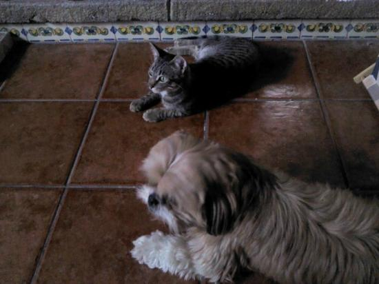 Taanah Guest House Antigua: Our pet Motis and Wiskilito