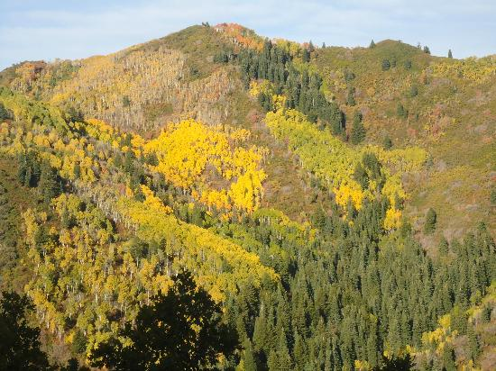 Mill Creek Canyon: Autumn view from Elbow Fork trail