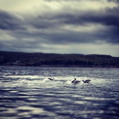 Elgol, UK: Dolphins in Loch Scavaig