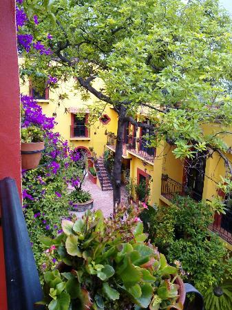 Casa Mia Suites Apartments: Vista de las Suites desde la terraza, hermosas plantas y paisaje provinciano...