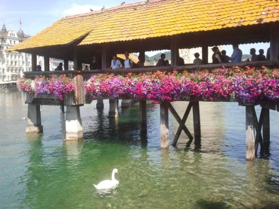 Chapel Bridge (Kapellbrucke): Flowers and swans