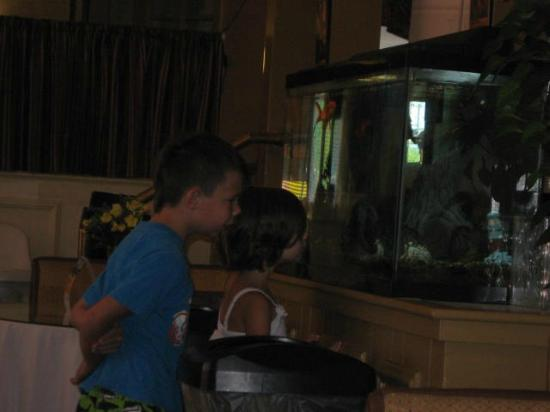 Quality Inn Downtown 4th Avenue: kids always enjoy looking at the fish aquarium in dining room