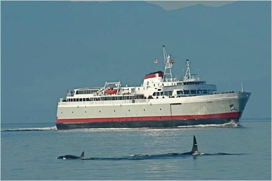 Black Ball Ferry Line: MV COHO