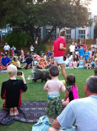 Hyatt Regency Hill Country Resort and Spa: animal show on the lawn