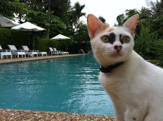Mekong Estate: pool guard