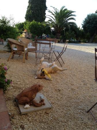 Agriturismo La Frescura: struttura animal friendly.. Kelly approva! :-)