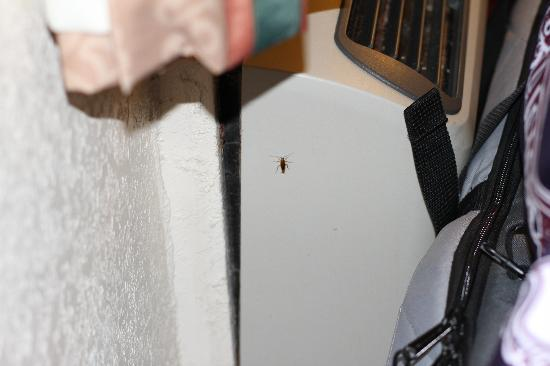 "Red Roof Inn Port Aransas : Travelodge, Port Aransas, TX ""roaches coming out of air conditioner"""
