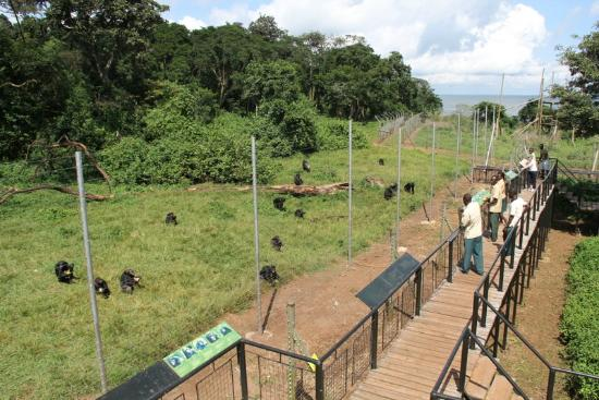 Ngamba Island Reviews