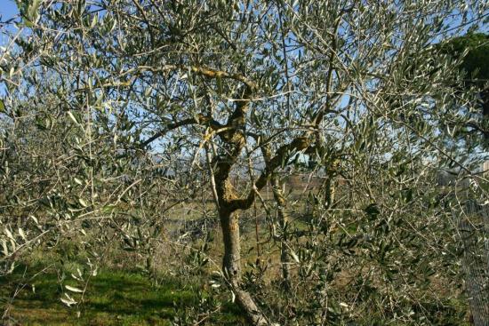 Casale Selvetella: La nostra campagna- our countryside