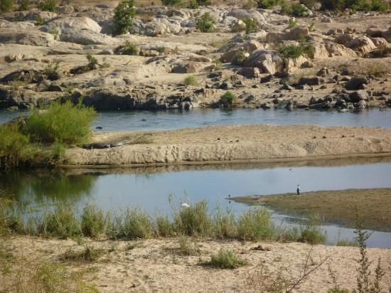 Mjejane River Lodge: VERY large croc on sandbank visible from lawns