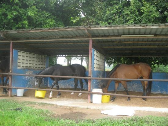 A'Famosa Resort Hotel Melaka: horse ride area
