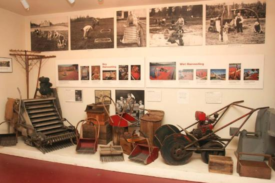 Cranberry Museum: Equipment display in museum