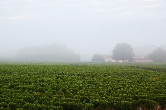 Chateau de Mole: Misty morning
