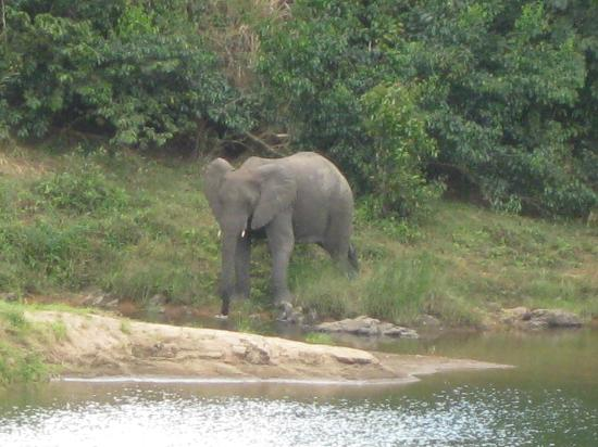 Tongole Wilderness Lodge : Elephant viewed from the lodge at Tongole