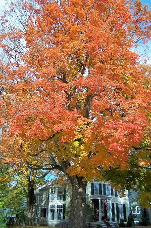 The Red Door Bed and Breakfast : Autumn splendor