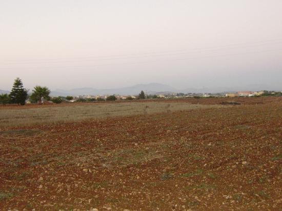 Hibiscus: panorama