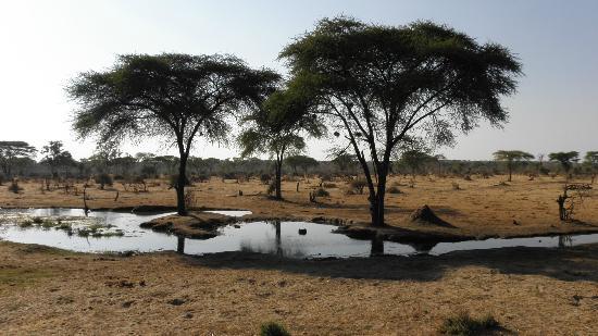 Senyati Safari Camp : Waterhole from hide