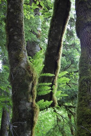 Olallie State Park: views of the rainforest