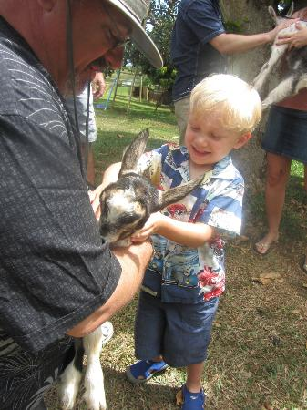 Kauai Kunana Dairy Farm Tour : Petting the baby goats