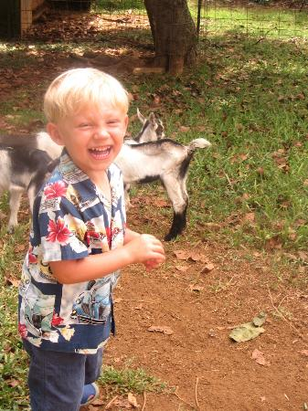 Kauai Kunana Dairy Farm Tour : My son loved the baby goats