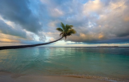 Wakatobi Dive Resort : Wakatobi's beachside views
