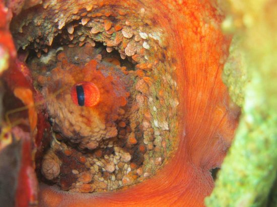 GoDive Mykonos PADI Diving Resort