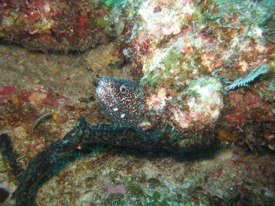 Valentine's Dive Center: The Plateau - Amore' with a moray