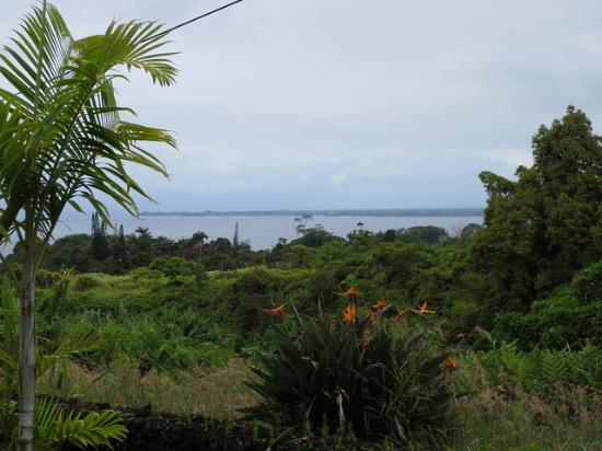 ‪آيلاند جوديز: Hilo bay from the front yard