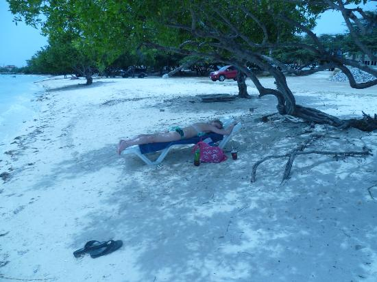 Aruba Surfside Marina: under the divi tree