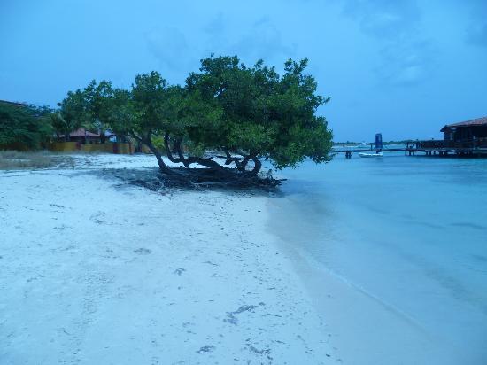 Aruba Surfside Marina: beach at surfside