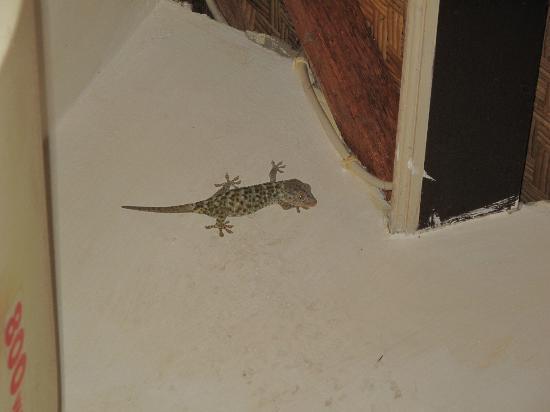 Mumbul Guesthouse: huge gecko