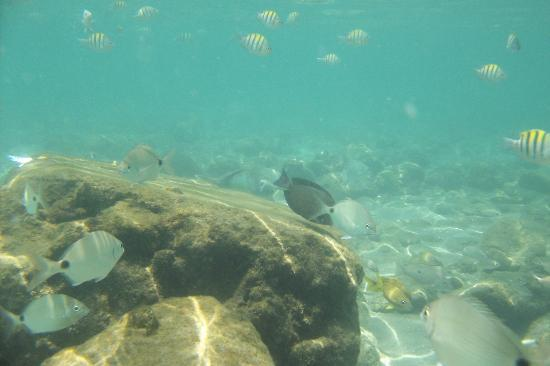 Riviera Beach, FL: snorkeling