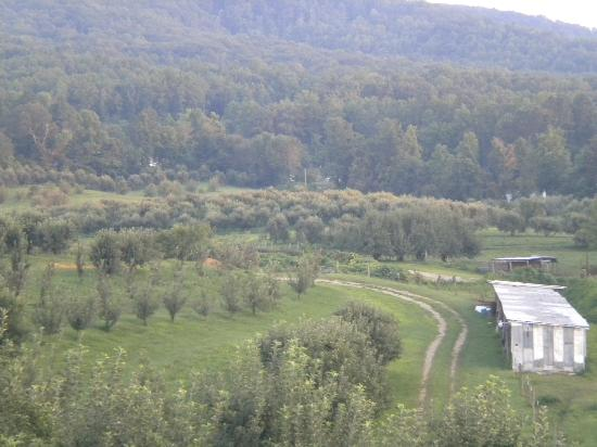 Cosby, TN: 60 acres of apples